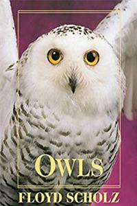 eBook Owls: An Artist's Guide to Understanding Owls download